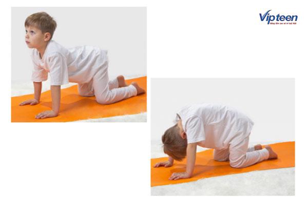 cách tập yoga tăng chiều cao với tư thế con mèo