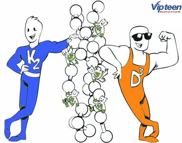Uống Canxi kết hợp Vitamin D3 và Vitamin K2